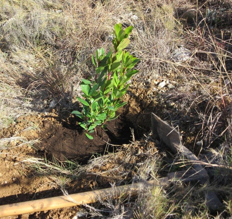 Plantada d'arbres 20è aniversari Escola El Cim