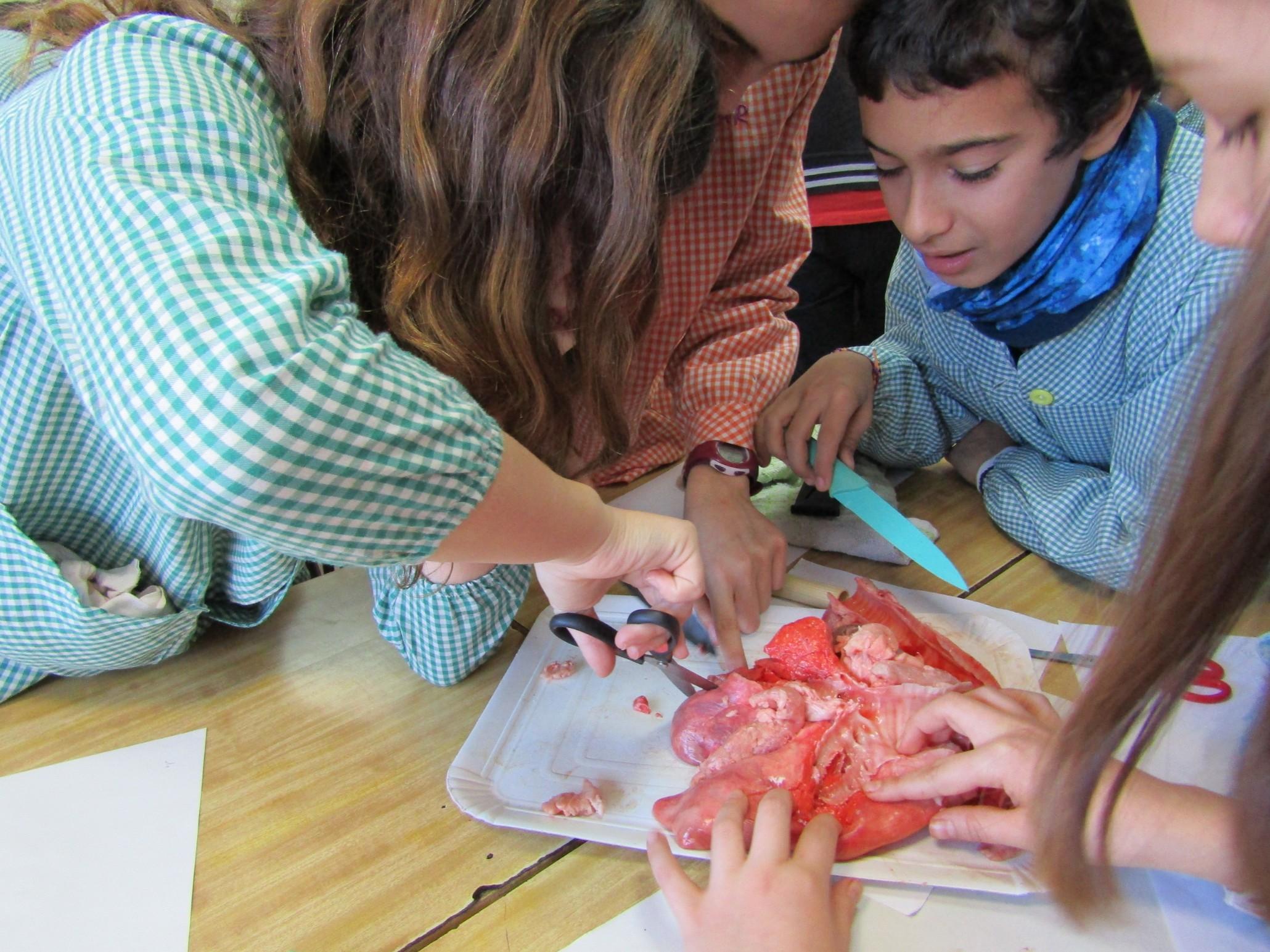 Experiments i pràctiques a medi natural per aprendre millor
