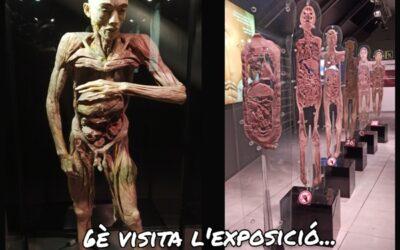 6è visita l'exposició The Human Bodies